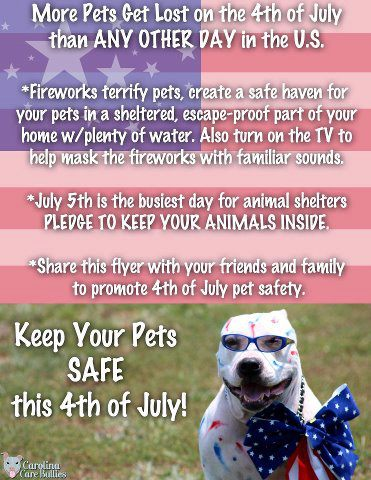 Pet Safety on July 4