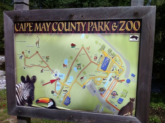 A Map of the Cape May County Park & Zoo