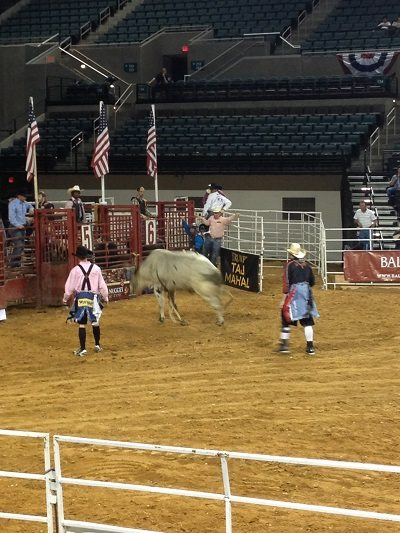 Atlantic City Rodeo Bull
