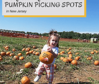 pumpkin picking spots
