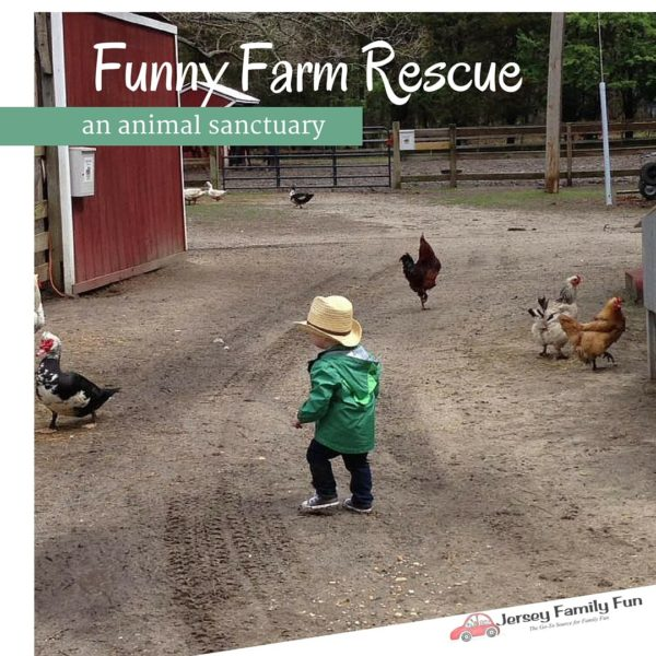 Funny Farm Atlantic County Animal Rescue Center