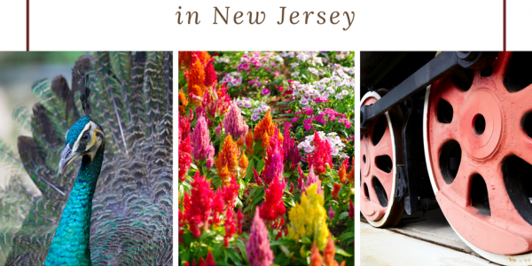 FREE Places to Visit in New Jersey