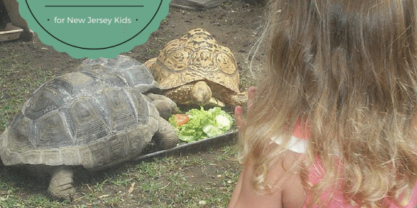 31 Amazing August Activities for New Jersey Kids