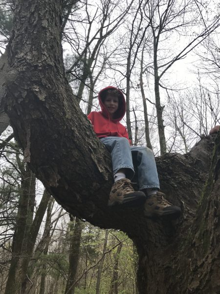 Climbing trees with Northside Shoes at Hacklebarney State Park