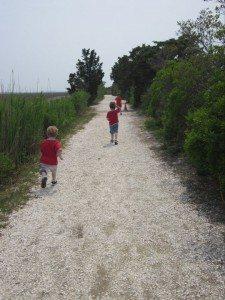 Salt Marsh Trail, Wetlands Institute