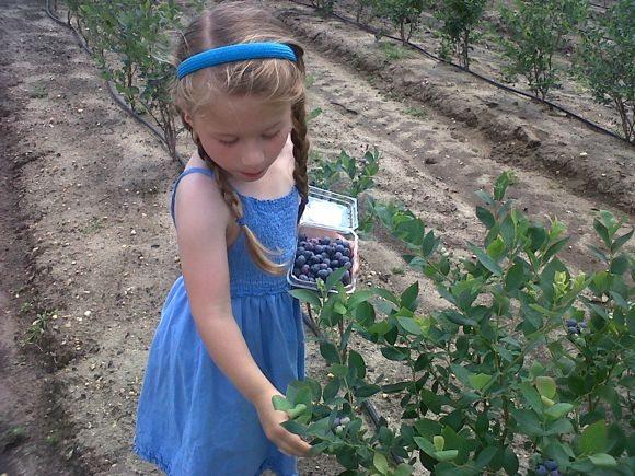 Photo Credit: DiMeo Fruit Farms and Organic Blueberry Nursery, Hammonton, NJ