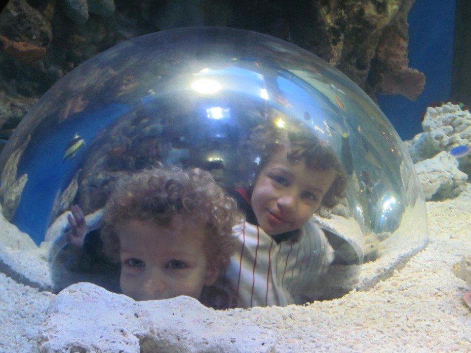 adventure aquarium kid zone 2