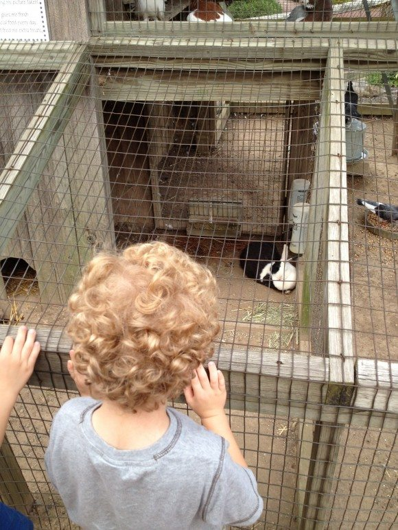 My sons loved visiting with the bunnies and chickens in the Peddler's Village Courtyard. |Photo Credit Jersey Family Fun