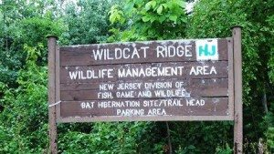 Wildcat Ridge - a more advanced trail with lots of nature and old mines.