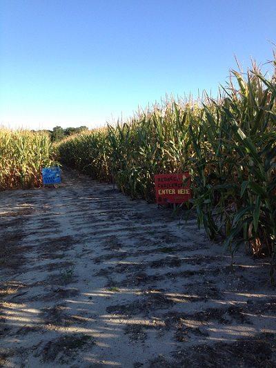 Sahl's Father Son Farm Corn Maze