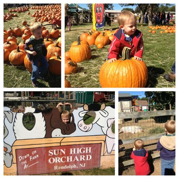Sun High Orchards has a variety of free farm fun activities.