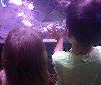 Lizards at Atlantic City Aquarium