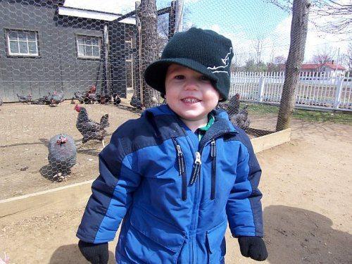 chickens longstreet farm