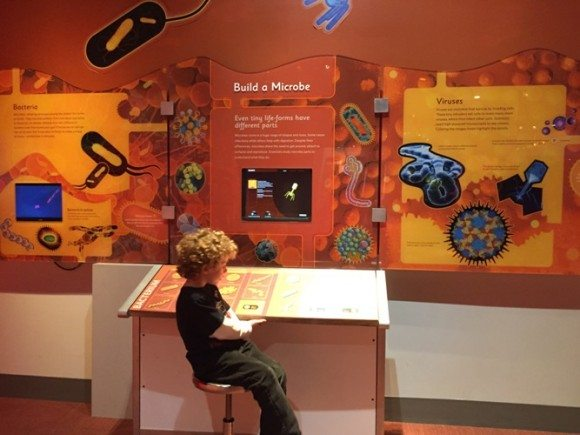 Picture from inside the Microbes Rule! exhibit at the Liberty Science Center in Jersey City New Jersey