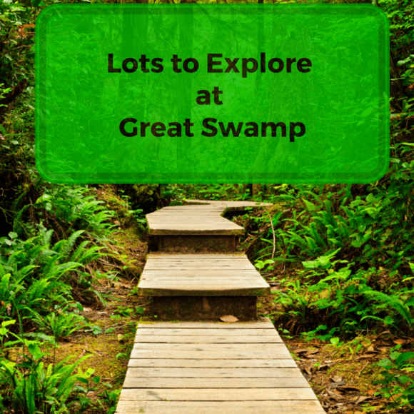Lots to Explore at Great Swamp (1)