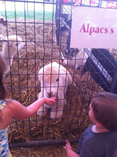 Feeding animals at the fair. New Jersey 4H Fair