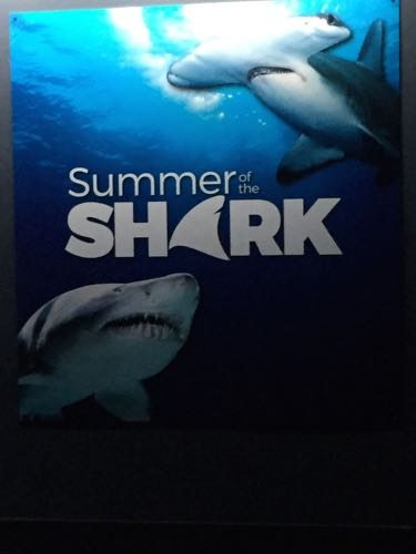 Summer of the Shark until August 23!