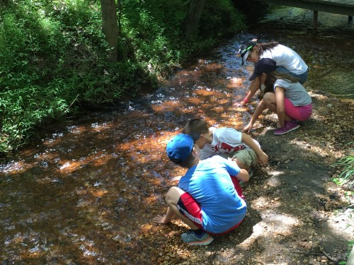 Exploring the streams at Allaire