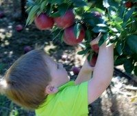 New Jersey farms with apple picking.