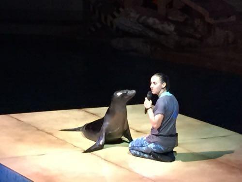 Sea Lion show!