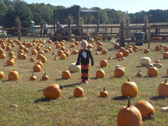 New Jersey Pumpkin Patches