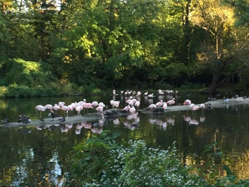 Pretty flamingoes!