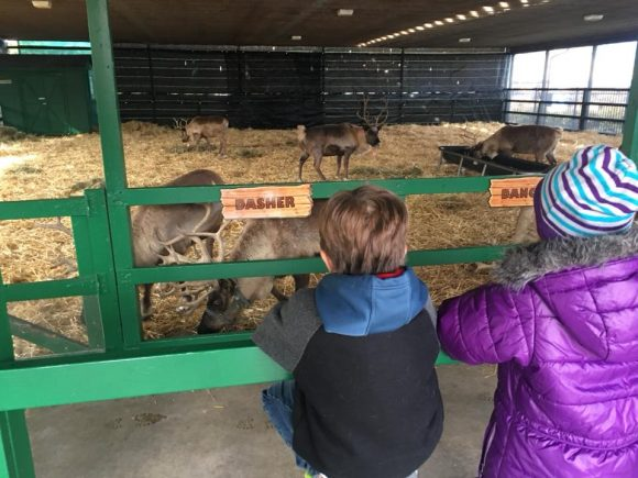 visiting with the reindeer is one of the Ways to Experience Hersheypark Christmas Candylane