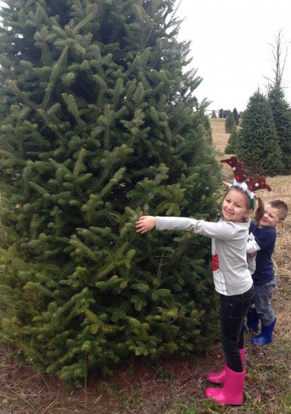 Christmas Tree farms in northwest nj