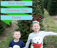 New Jersey Christmas Tree Farms