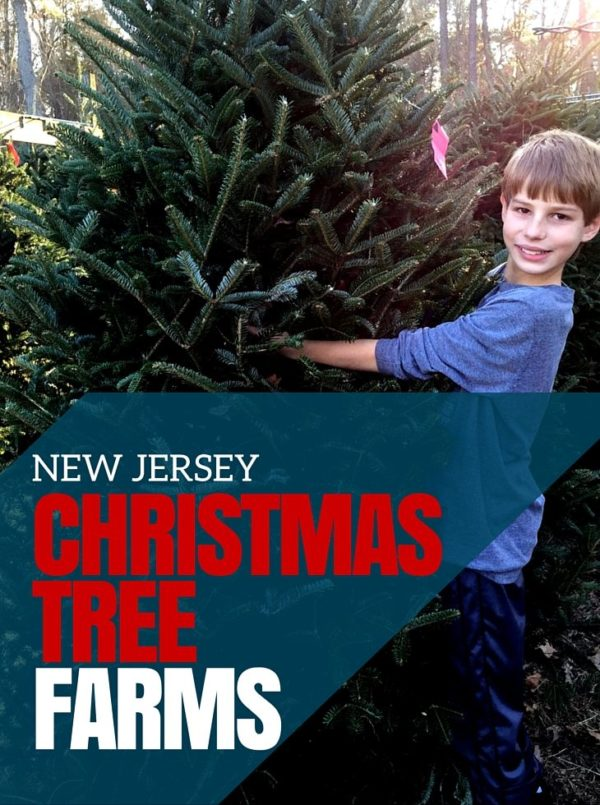 Upstate New York- Christmas Tree Farms That Open In November 2020 50+ New Jersey Christmas Tree Farms ~ Jersey Family Fun