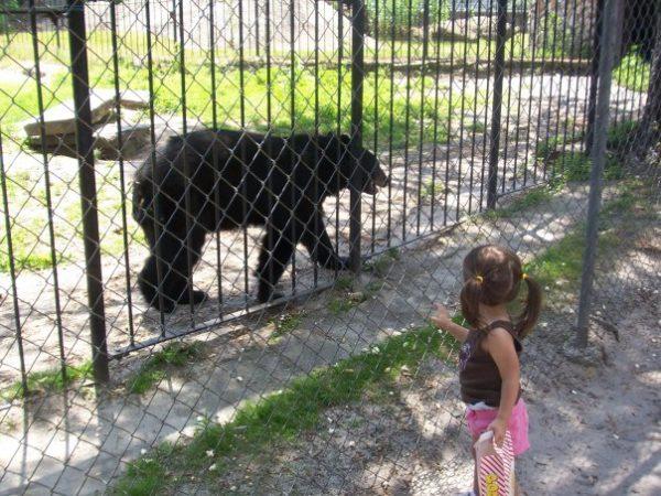 bear popcorn park zoo