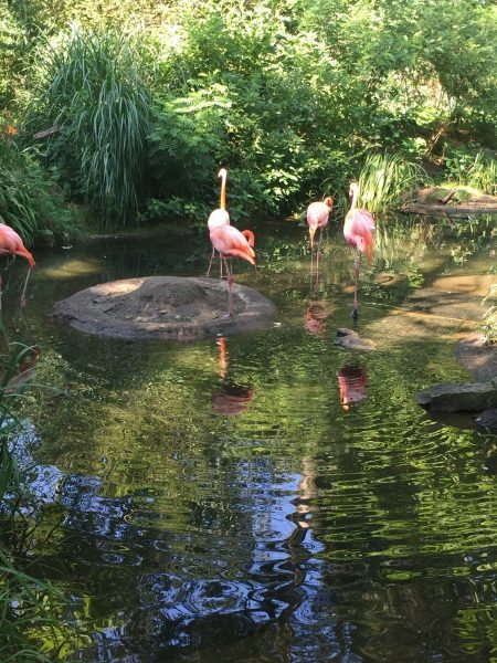 Pittsburgh Zoo & PPG Aquarium flamingos