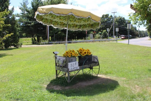 antique flower cart at Good Old Days Sunflower Farm