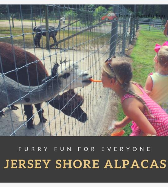 Jersey Shore Alpacas!
