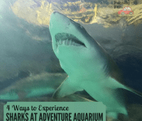 sharks at Adventure Aquarium
