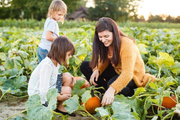 pumpkin picking in Medford at Johnson's Corner Farm