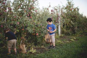 picking apples in medford at Johnson's Corner Farm