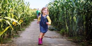 Johnson's Corner Farm corn maze