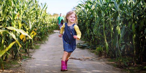 Johnson's Corner Farm corn maze