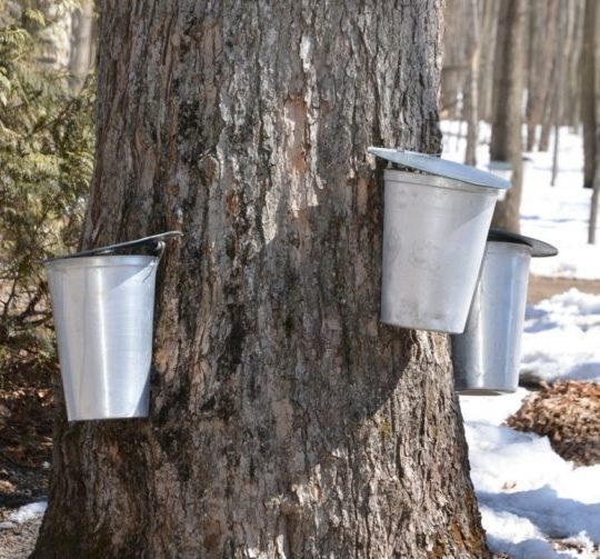 Maple Sugaring New Jersey