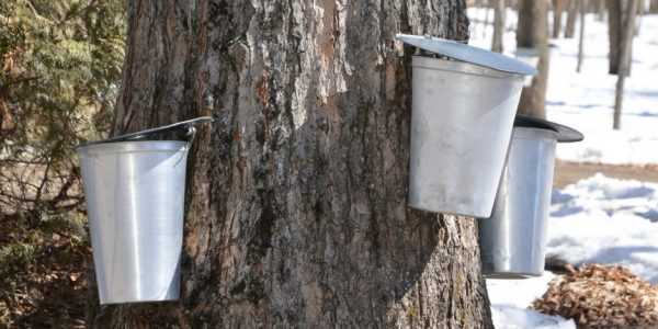 The Best Places to Go Maple Sugaring In New Jersey