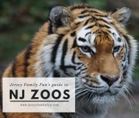 New Jersey Zoos photo credit Jersey Family Fun