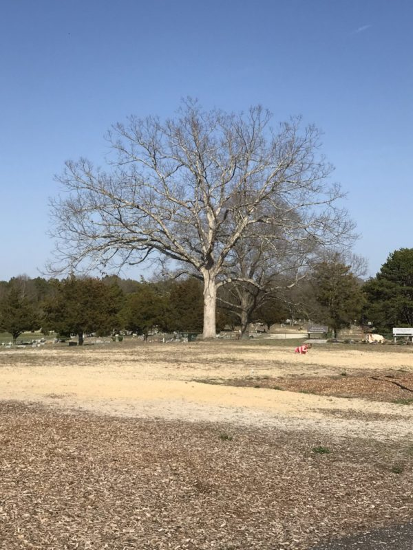 Bass River Township Park has limited shade available