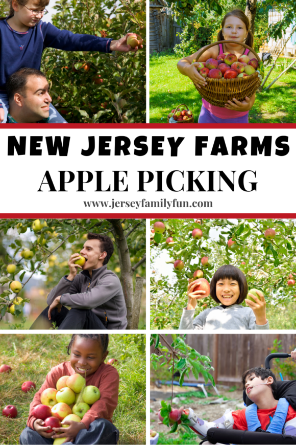 New Jersey apple orchards pinterest image