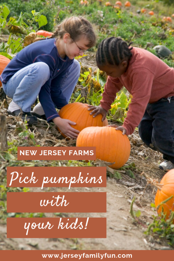 2 kids pick pumpkins at New Jersey farm