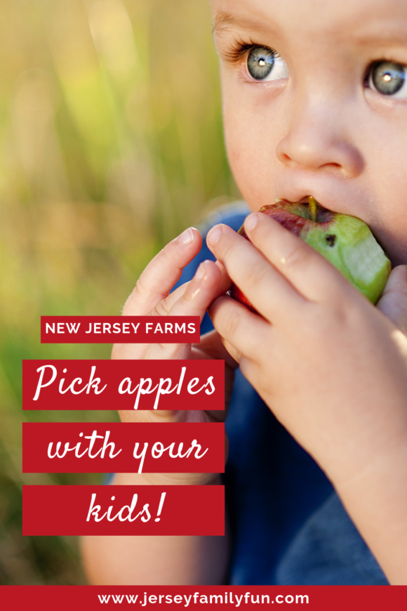 pick apples with your kids at these new Jersey farms