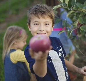 picking apples at Johnson's Locust Hall Farm in Jobstown New Jersey