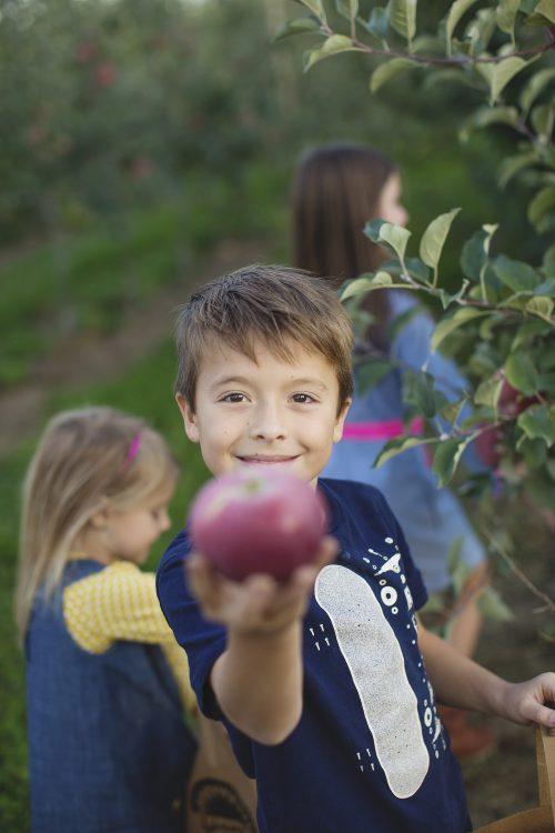 Apple picking at Johnson Locust Hall Farm in Jobstown