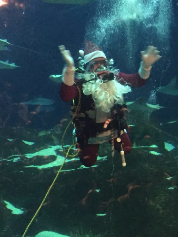 Adventure Aquarium Christmas Underwater Days Scuba Santa