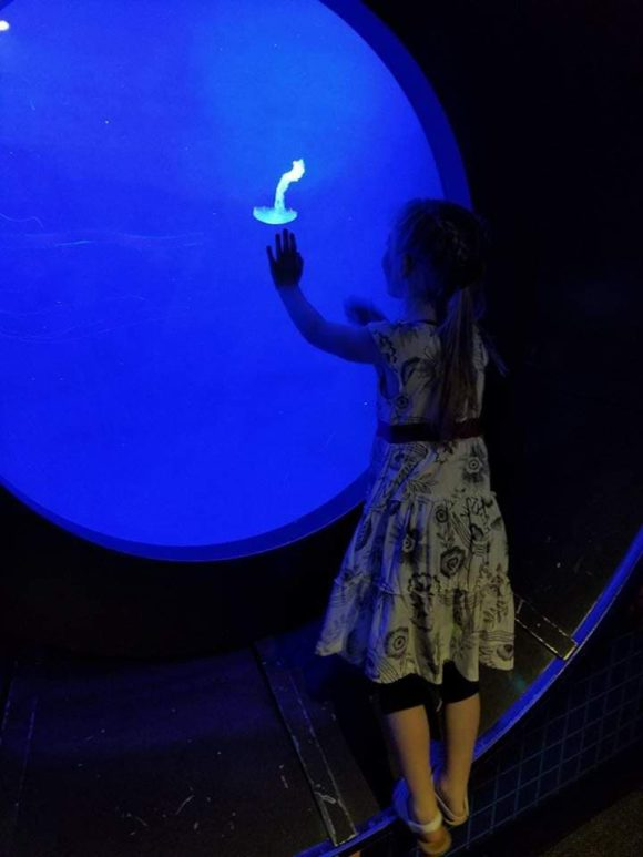 glow in the dark jellyfish at the Adventure Aquarium in Camden, New Jersey
